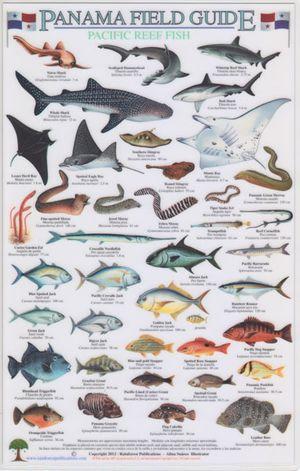 Panama Pacific Reef Fish A4 Lam