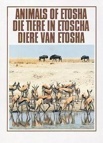 Animals Of Etosha Np Guide