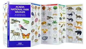 Acadia National Park Wildlife Waterford
