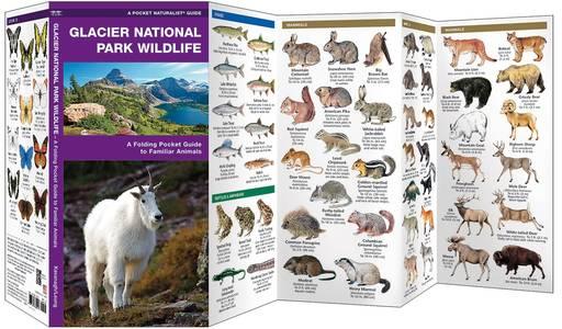 Glacier National Park Wildlife Waterford