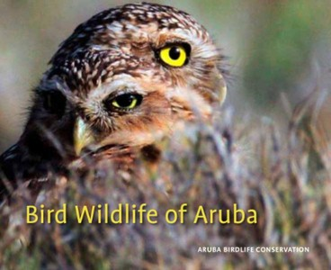Bird Wildlife of Aruba