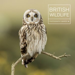 British Wildlife Photography Awards 9