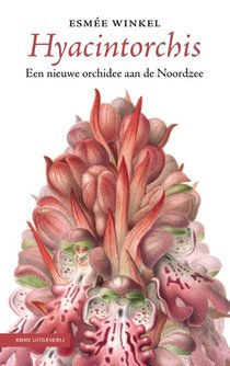Hyacintorchis