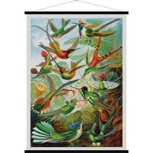 Trochilidae (Kolibries)