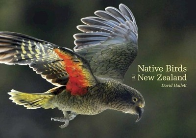 Native Birds Of New Zealand Photo Book