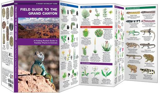 Field Guide The Grand Canyon Waterford