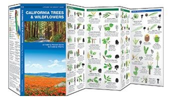 California Trees & Wildflowers Waterford