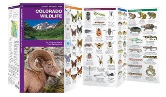 Colorado Wildlife Waterford Press
