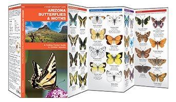 Arizona Butterflies & Moths