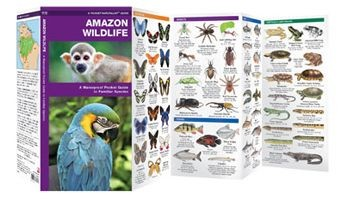 Amazon Wildlife Waterfordpress