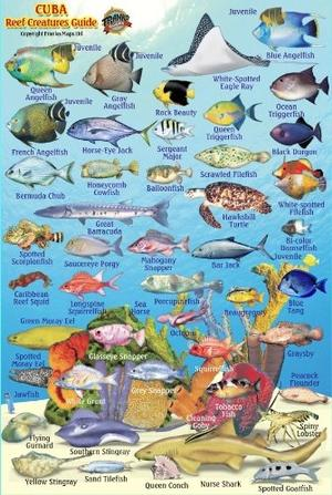 Cuba Reef Fishes Card Franko' S
