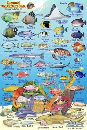Cozumel Franko Reef Creatures