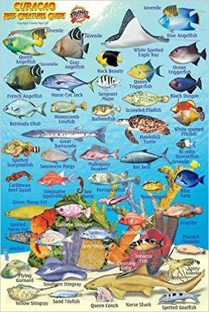 Curacao Reef Creatures Guide Minicard