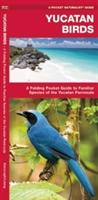 Yucatan Birds Waterford