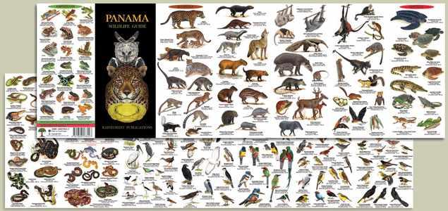 Panama Wildlife Rainforest