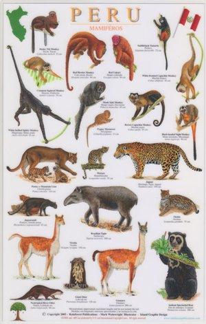 Peru Zoogdieren A4 Gelamineerde Kaart