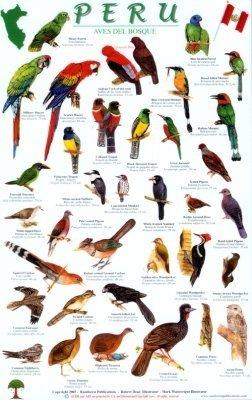 Peru Forest Birds A4 Gelamineerde Kaart