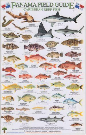 Panama Caribbean Reef Fish A4 Lam