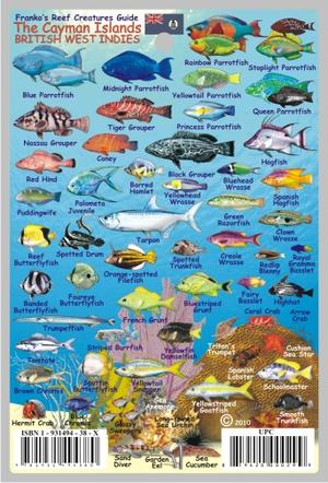 Cayman Islands Fishes Card Franko' S