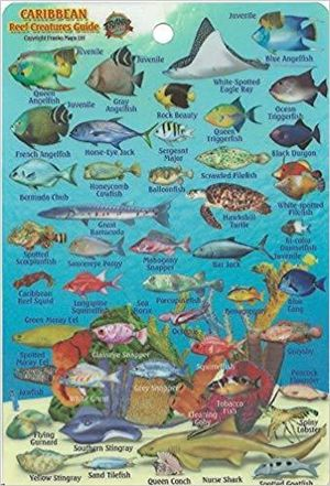 Caribbean Reef Fishes Card Franko' S