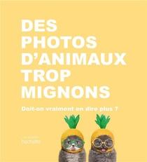 Des Photos D'animaux Trop Mignons ; Doit-on Vraiment En Dire Plus ?