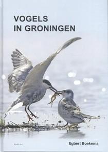 Vogels in Groningen