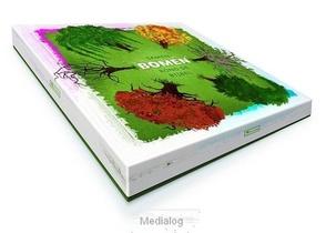 Bordspel Samen Bomen Rond De Bijbel