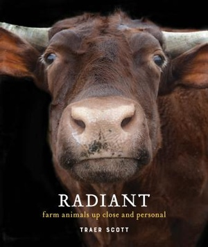 Radiant: Farm Animals Up Close and Personal (Farm Animal Photography Book)