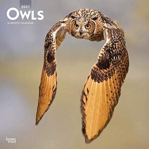 Owls - Uilen Kalender 2021