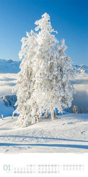 Bäume - Bomen - Trees kalender 2021