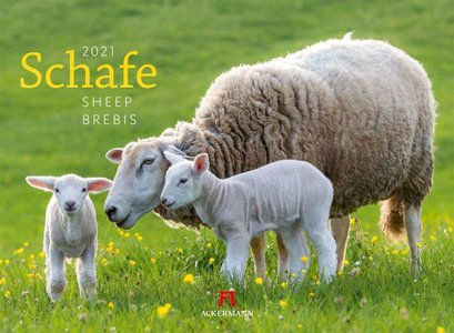 Schafe - Shapen - Sheep kalender 2021