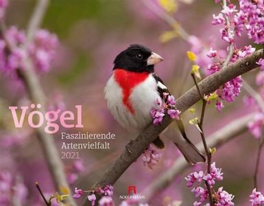 Vögel - Vogels - Birds kalender 2021