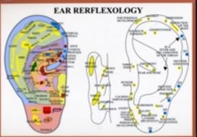 Ear Reflexology - A4