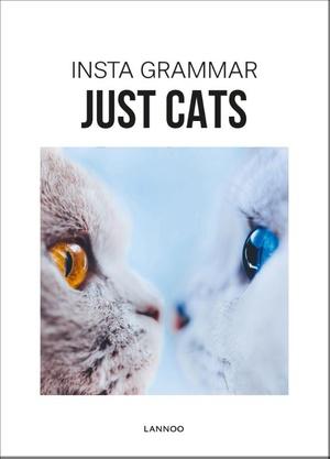 Insta Grammar - Just Cats