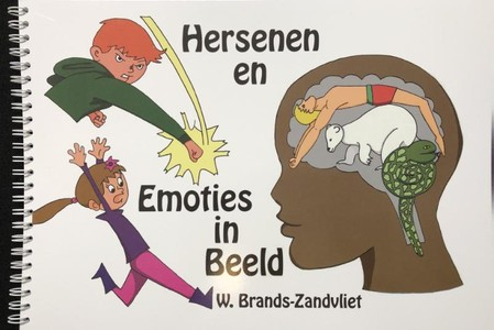 Hersenen en emoties in beeld